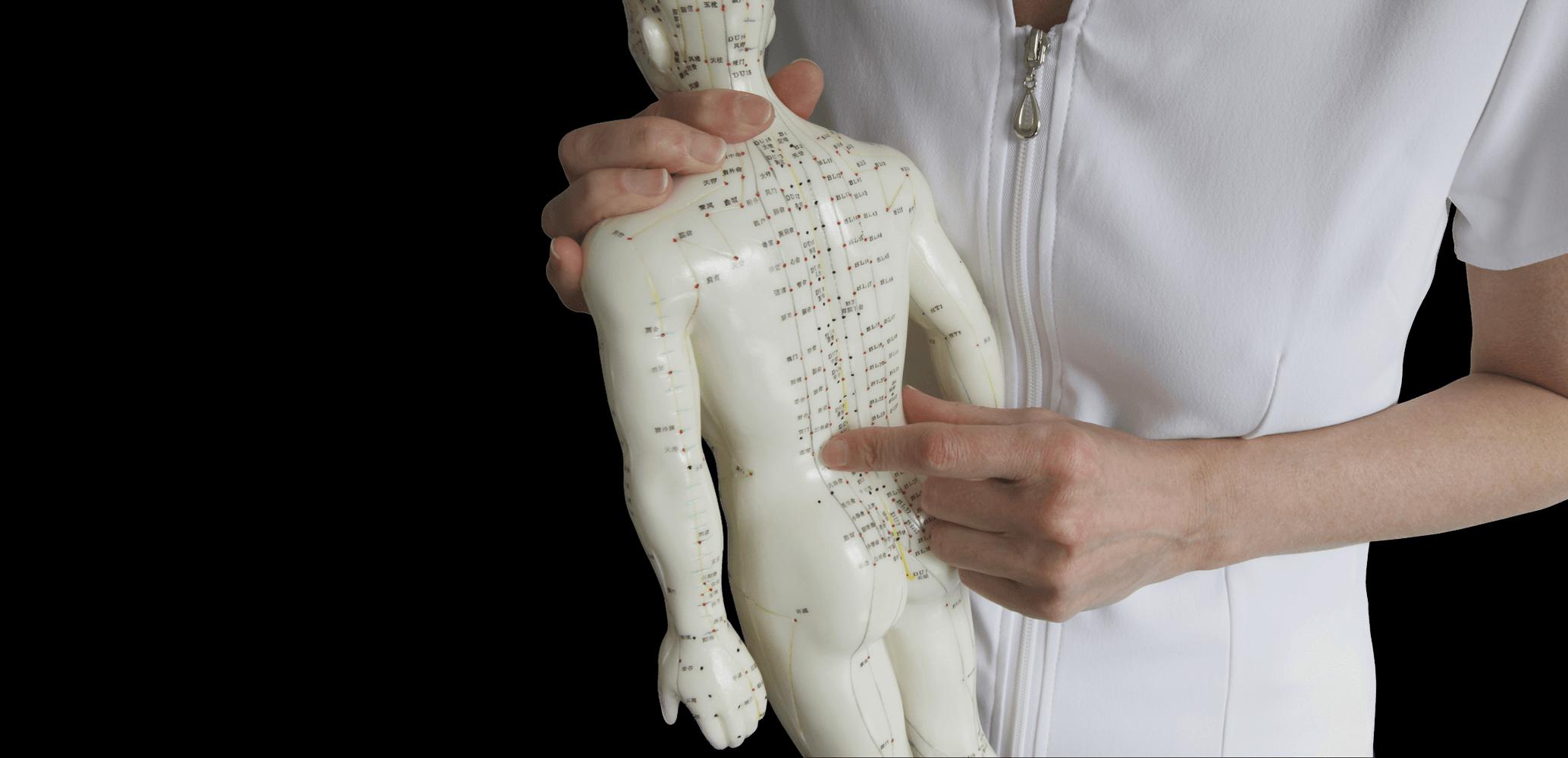 human-body.png